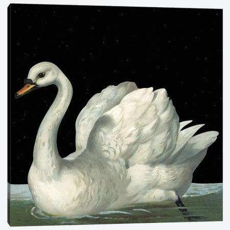 Swan In Night Canvas Print #ARM343} by Art Mirano Canvas Art