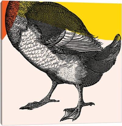 Bird On Yellow Legs Canvas Art Print