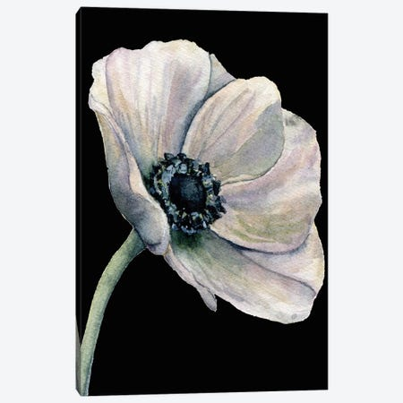 Flower On The Black Canvas Print #ARM606} by Art Mirano Canvas Art