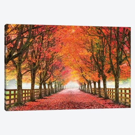 North Bend Trees Canvas Print #ARN1} by Aaron Reed Canvas Art