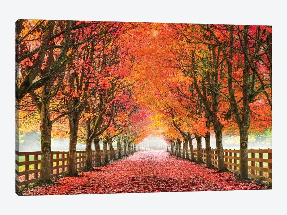 North Bend Trees by Aaron Reed 1-piece Canvas Art