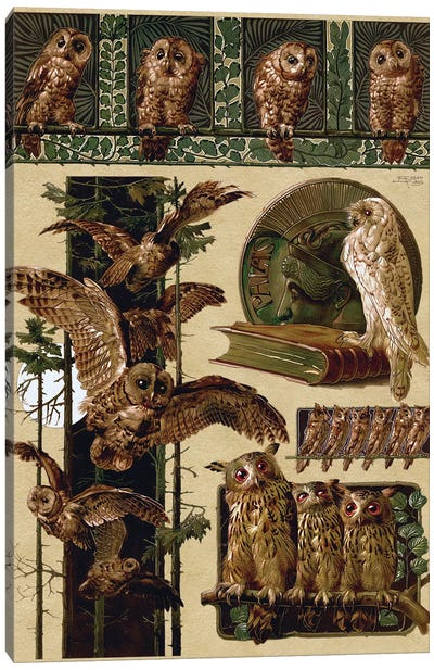Owls, 1896 Canvas Art Print