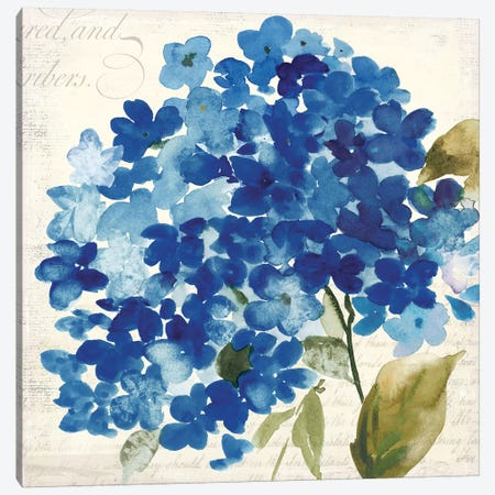 Hampton Hydrangea II Canvas Print #ASJ131} by Asia Jensen Canvas Artwork