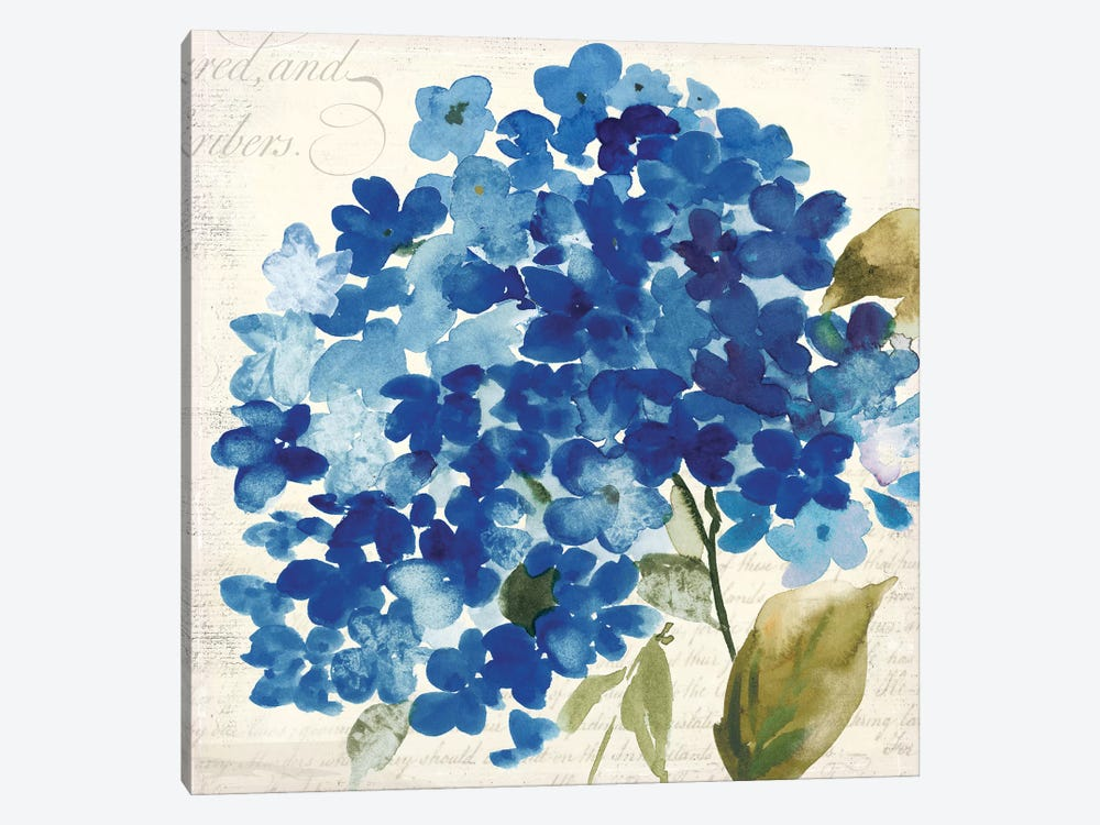 Hampton Hydrangea II by Asia Jensen 1-piece Canvas Art