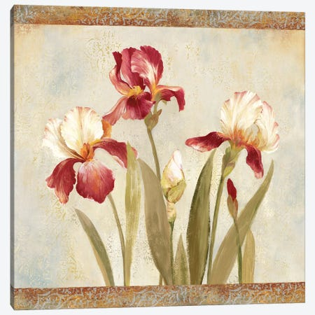 Iris Tapestry II Canvas Print #ASJ153} by Asia Jensen Canvas Art