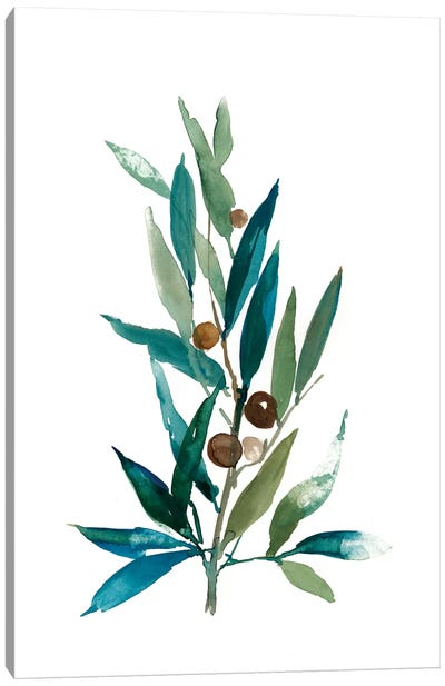 Olive Branch I Canvas Art Print