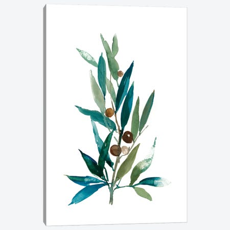 Olive Branch I Canvas Print #ASJ201} by Asia Jensen Canvas Artwork