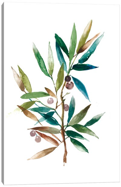 Olive Branch II Canvas Art Print