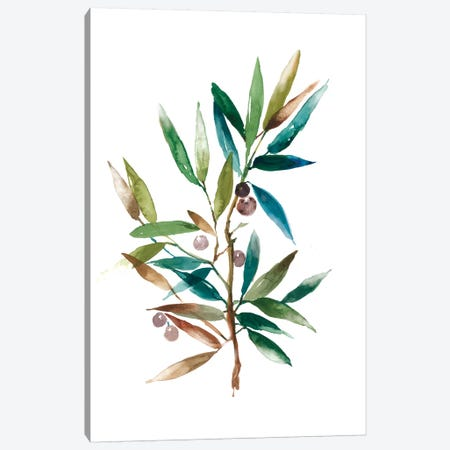 Olive Branch II Canvas Print #ASJ202} by Asia Jensen Canvas Artwork