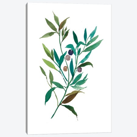Olive I Canvas Print #ASJ203} by Asia Jensen Canvas Wall Art
