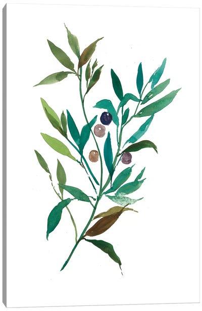 Olive I Canvas Art Print