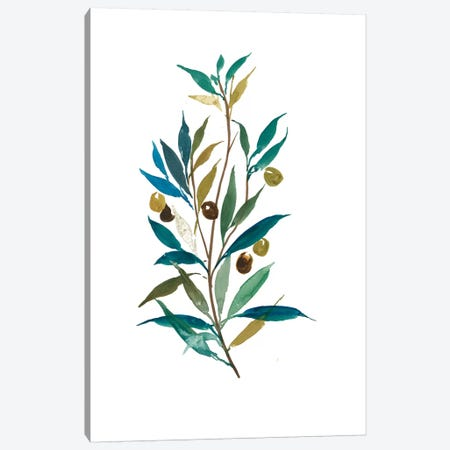 Olive II Canvas Print #ASJ204} by Asia Jensen Canvas Print