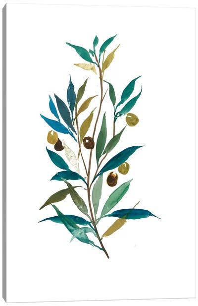 Olive II Canvas Art Print