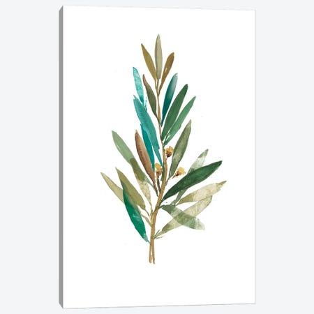 Olive III Canvas Print #ASJ205} by Asia Jensen Art Print