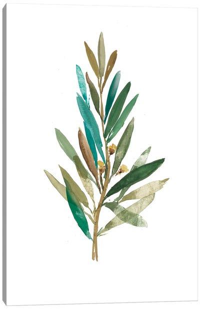 Olive III Canvas Art Print