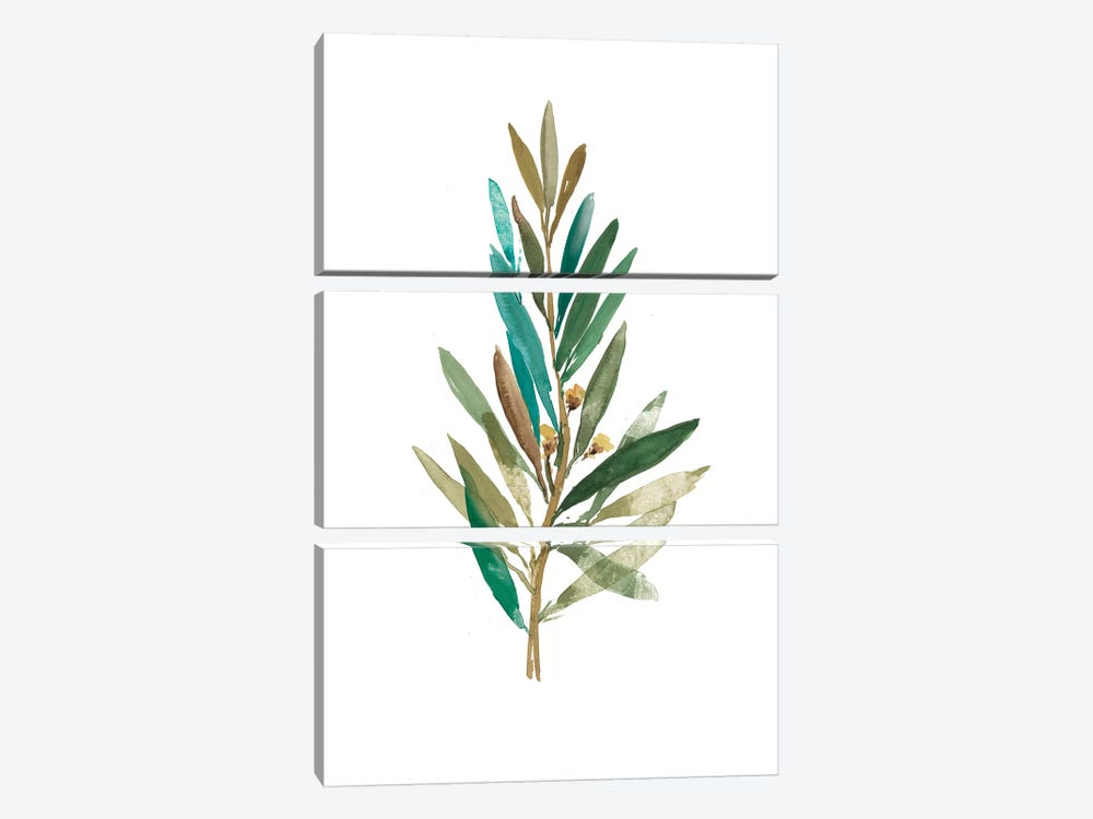 Olive III by Asia Jensen 3-piece Canvas Print