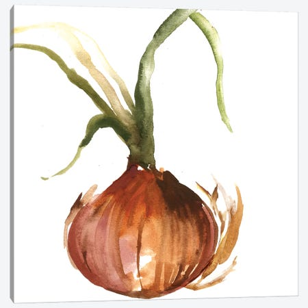 Onion Canvas Print #ASJ209} by Asia Jensen Canvas Artwork