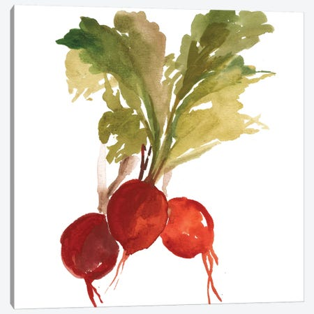 Radish Canvas Print #ASJ244} by Asia Jensen Canvas Art Print
