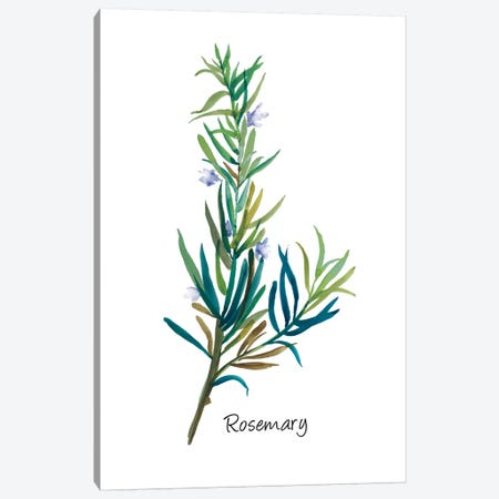Rosemary I Canvas Print #ASJ247} by Asia Jensen Canvas Art Print