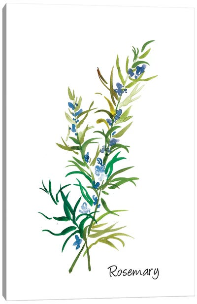 Rosemary II Canvas Art Print