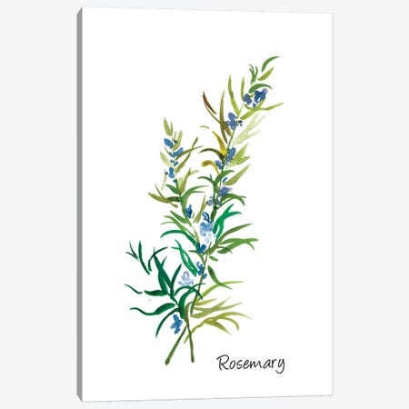 Rosemary II Canvas Print #ASJ248} by Asia Jensen Canvas Artwork