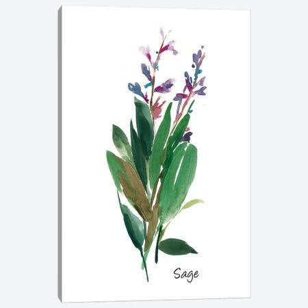 Sage I Canvas Print #ASJ251} by Asia Jensen Canvas Print