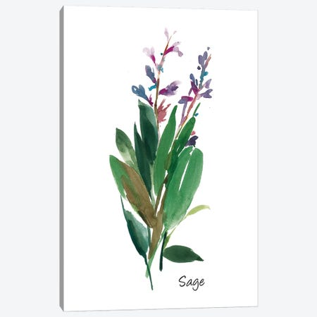 Sage I Canvas Print #ASJ251} by Asia Jensen Canvas Print