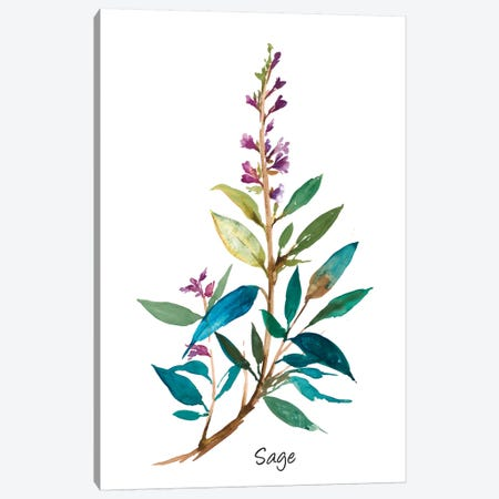 Sage II Canvas Print #ASJ252} by Asia Jensen Canvas Print