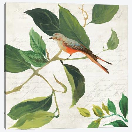 Singing Bird I Canvas Print #ASJ259} by Asia Jensen Canvas Art Print