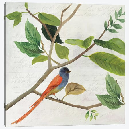 Singing Bird II Canvas Print #ASJ260} by Asia Jensen Canvas Art