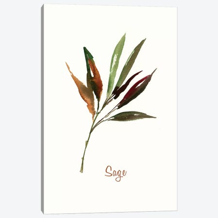 Wild Sage Canvas Print #ASJ323} by Asia Jensen Canvas Art Print