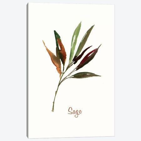 Wild Sage Canvas Print #ASJ323} by Asia Jensen Canvas Art Print