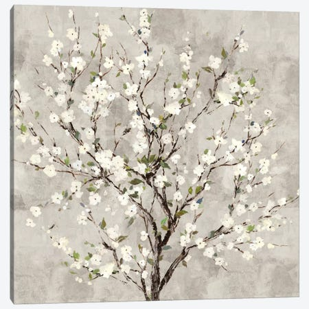 Bloom Tree Canvas Print #ASJ334} by Asia Jensen Canvas Art Print