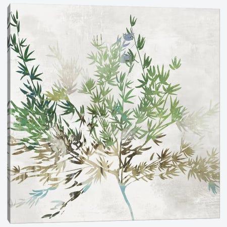 Olive Branch Canvas Print #ASJ340} by Asia Jensen Canvas Art Print