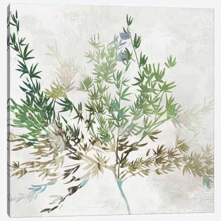 Olive Branch Canvas Print #ASJ340} by Asia Jensen Canvas Art Print