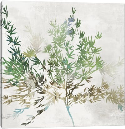 Olive Branch Canvas Art Print