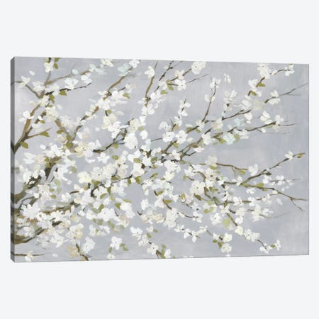 White Blossoms Canvas Print #ASJ347} by Asia Jensen Canvas Artwork