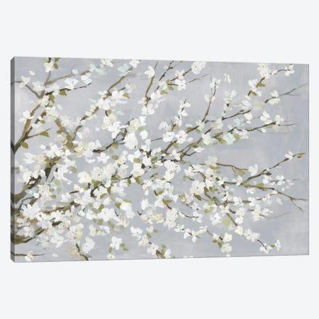 White Blossoms Canvas Print #ASJ347} by Asia Jensen Canvas Artwork