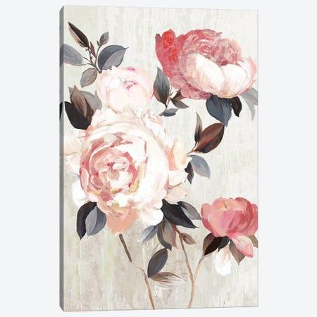Bloom of Blush  Canvas Print #ASJ426} by Asia Jensen Art Print