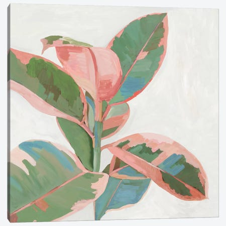 Pink Ficus I Canvas Print #ASJ471} by Asia Jensen Canvas Art Print