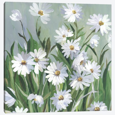 Daisy Day Canvas Print #ASJ490} by Asia Jensen Canvas Art Print