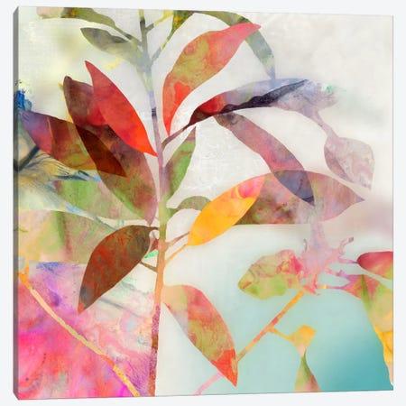 Charlotte I Canvas Print #ASJ49} by Asia Jensen Canvas Wall Art