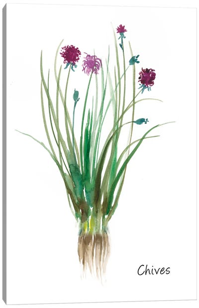Chives Canvas Art Print