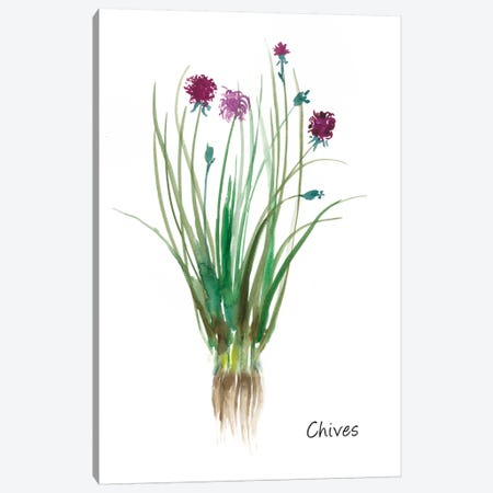 Chives Canvas Print #ASJ53} by Asia Jensen Canvas Print