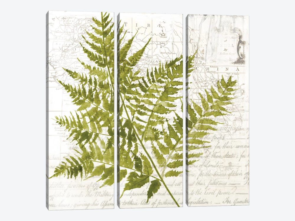 Fern I by Asia Jensen 3-piece Canvas Art Print