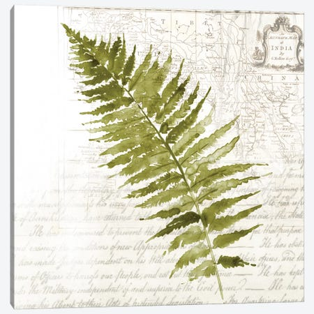 Fern II Canvas Print #ASJ84} by Asia Jensen Canvas Print