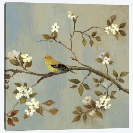 Apple Bloom II Canvas Print #ASJ8} by Asia Jensen Canvas Print