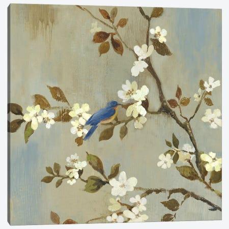 Apple Bloom III Canvas Print #ASJ9} by Asia Jensen Canvas Print