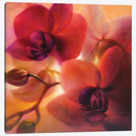 Orchids Canvas Print #ASK60} by Annette Schmucker Art Print