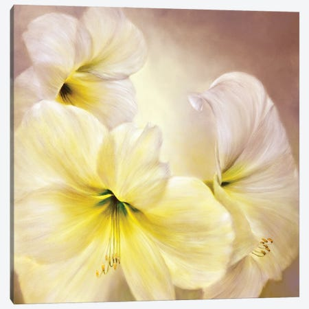 White Amaryllis Canvas Print #ASK90} by Annette Schmucker Canvas Wall Art